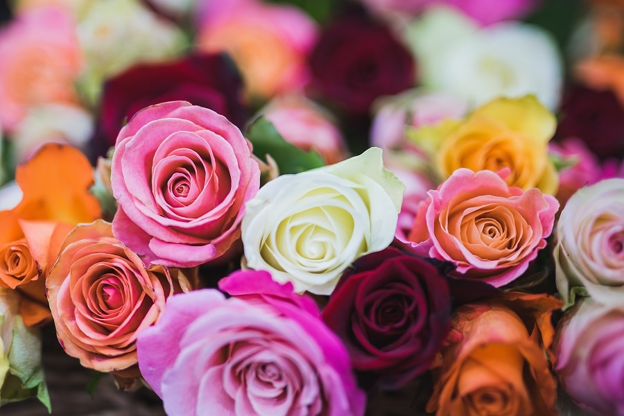 Hidden Facts That Your Florist Will Never Let You Know