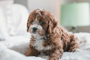 11 Tips To Keep Your House Super Clean with Pets