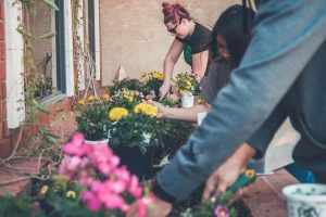 How to add Nitrogen to Soil & 5 Natural Methods to Try in Your Garden
