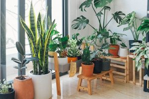 Most Demanding Houseplants for Making Home Eco-Friendly