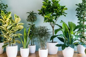 How Indoor Plants can Purify Home Air- Good for Family Health