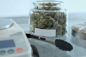 Top 7 Amazing Weed Delivery Companies in Burnaby That You Should Try